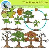 Oak Tree Life Cycle Clip Art Set