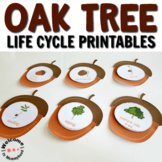 Oak Tree Life Cycle Printables for Fall Activities