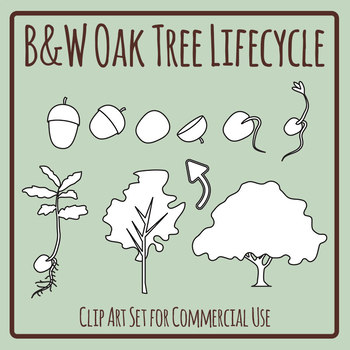 Oak Tree Lifecycle in Black and White / Printer Friendly Clip Art Commercial Use