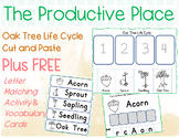 Oak Tree life Cycle a Cut and Paste Acorn Activity