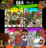 Oak: life cycle, types, uses… 93 items!