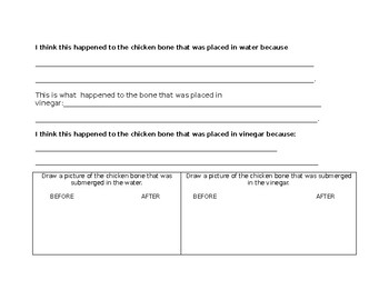 Observation Chart for Chicken Bone Experiment