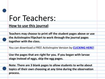 Observation Journal: (Raising Ladybugs)