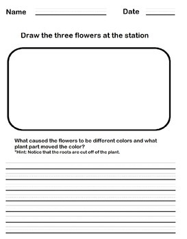 Observation Sheet (For colored carnation activity)