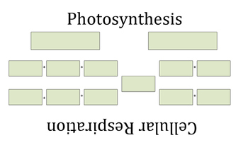 Concept Mapping Cellular Respiration and Photosynthesis