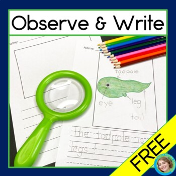 Observe and Write Free Writing Paper