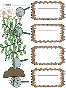 Observing Plants Lab Sheets