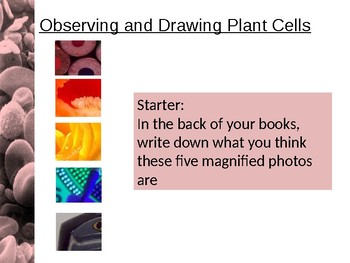 Observing and Drawing Plant Cells