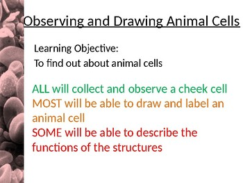 Observing and Drawing animal cells