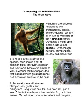 Observing the Great Apes