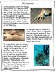 Ocean Animal Adaptations Non-Fiction Close Reading Pack