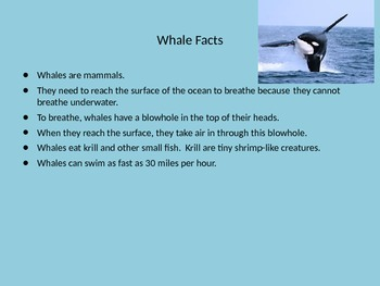 Ocean Animal Facts PPT