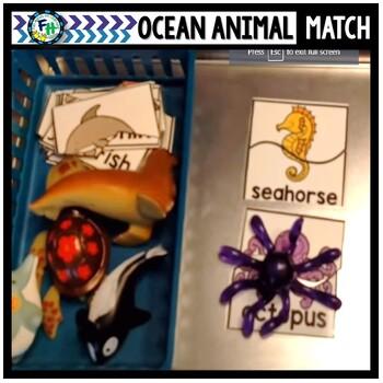 Ocean Animal Match Up Activity