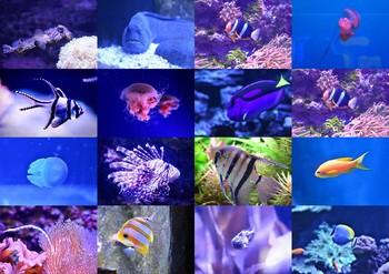 Ocean Animal Photos