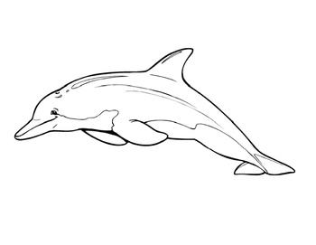 Ocean Animal Picture Mural