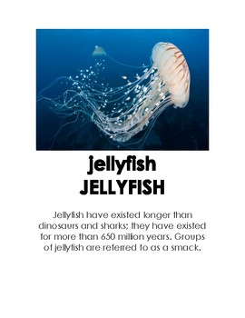 Ocean Animal Pictures With Fun Facts For Kids