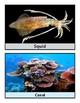 Ocean Animal Posters
