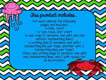 Ocean Animal Research {Bundle}