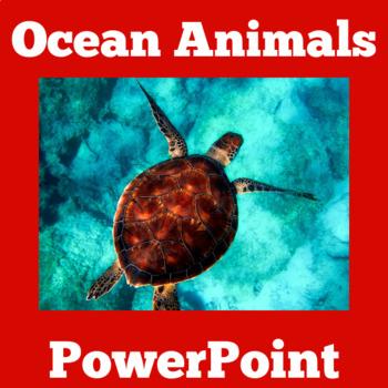 Ocean Animals Activity | Ocean Animals PowerPoint | Ocean Animals Lesson