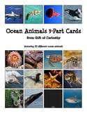 Ocean Animals 3-Part Cards