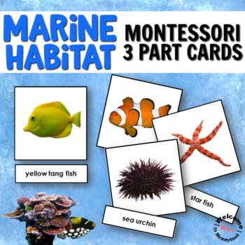 Ocean Animals 3 Part Cards