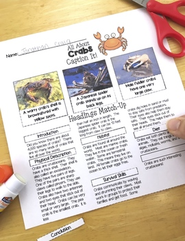 Ocean Animals Reading: Crabs Differentiated Reading Passages & Comprehension