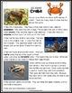 Ocean Animals Reading: Crabs Differentiated Reading Passag