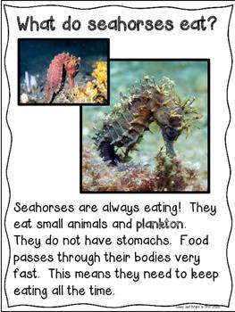 Ocean Animals Close Reading Kindergarten & First Grade