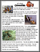 Ocean Animals Reading Freebie: Clownfish Nonfiction Readin
