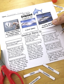 Ocean Animals Reading: Dolphins Differentiated Reading Passages & Comprehension