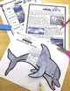 Ocean Animals Reading: Dolphins Differentiated Reading Pas