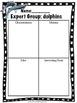 Ocean Animals: Expert Groups (CCSS aligned)