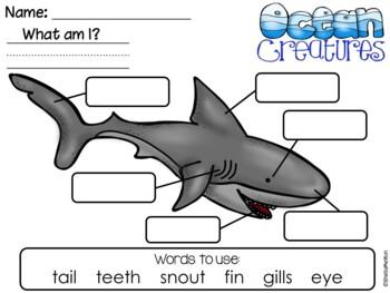 Ocean Animals Label the Picture