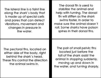 Parts of Ocean Animals Four-Part Cards Bundle