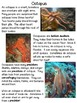 Ocean Animals | Differentiated Texts | Nonfiction Close Reading