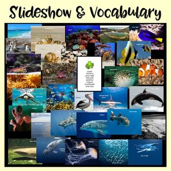 Ocean Animals Nonfiction Close Reading & Visual Vocabulary Unit
