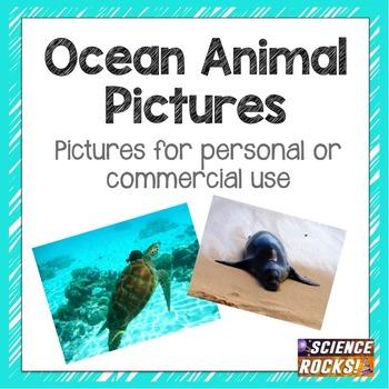 Ocean Animals Photographs