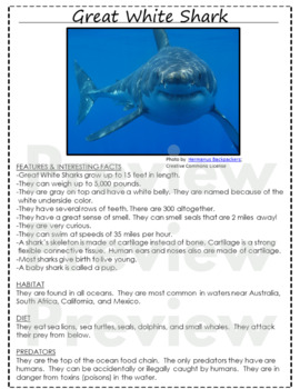 Ocean Animals Reading & Writing Pages ELA CCSS! 21 ocean creatures