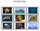 """Ocean Animals Real Photo """"I See"""" Book for Special Education Classrooms"""
