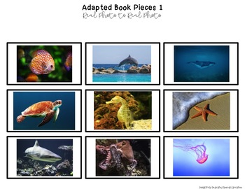 "Ocean Animals Real Photo ""I See"" Book for Special Education Classrooms"
