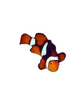 Ocean Animals Realistic Commercial Clip Art