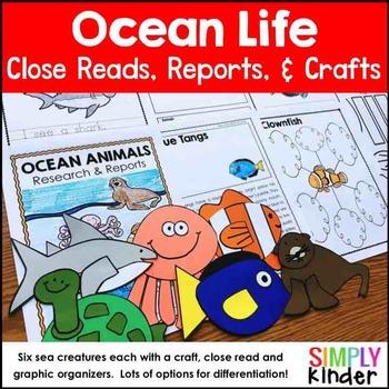 Ocean Animals Reports