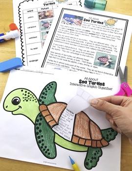 Ocean Animals Reading: Sea Turtles Differentiated Passages & Comprehension