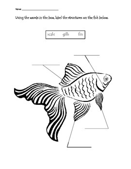 Ocean Animals Structure Labeling Worksheets