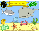 Sea Life Ocean Animals Clip Art