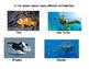 Ocean Book for Ocean unit