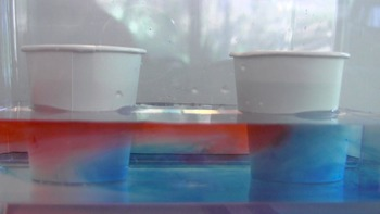 Ocean Currents Video Demonstration: Warm Water Rises While Cold Water Sinks