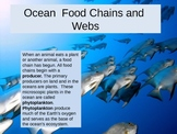 Ocean Food Chain PPT