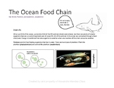 Ocean Food Web/Chain Notes