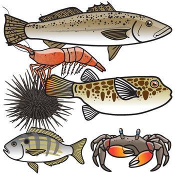 Ocean Food Web Clip Art Set